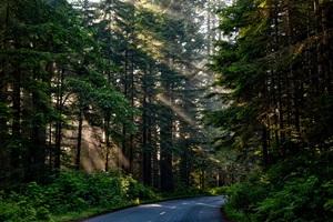 zalesianie gruntu